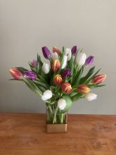 Two Dozen Tulips Arranged